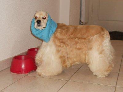 patron snood pour chien
