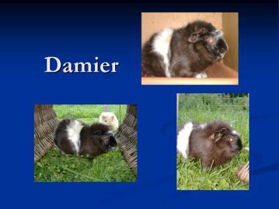 damier