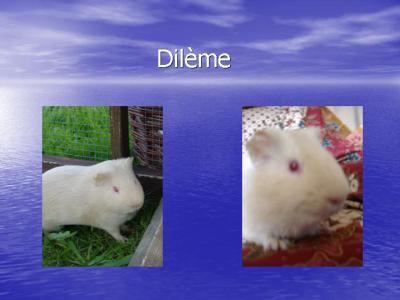dilème
