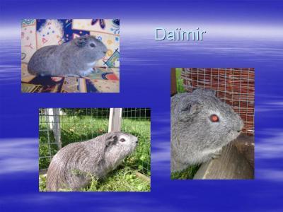 daïmir