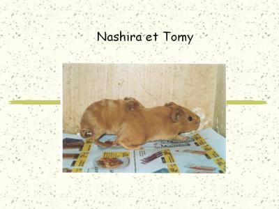 nashira et tomy